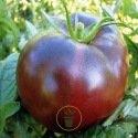 Tomate Noire de Crimée 25 graines