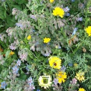 Mélange de fleurs répulsif limaces 2 grammes