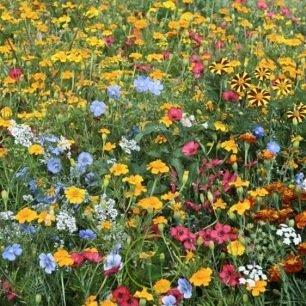 Mélange de fleurs anti puçerons et autres ravageurs 2 grammes
