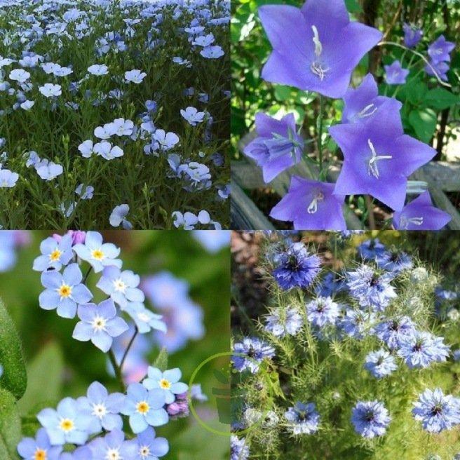 Mélange de fleurs bucolique bleu