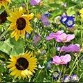 Prairies fleuries - Mélanges biodiversité