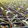 Matériel pour semis et bouturage