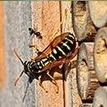 Lutte contre les fourmis - guêpes et autres insectes