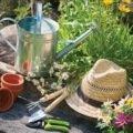 Les bases du jardinage