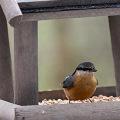 Mangeoires pour oiseaux et écureuils