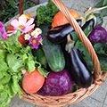 Packs et Kits de graines de légumes