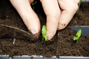 Graines de fleurs et de légumes à semer et repiquer au jardin
