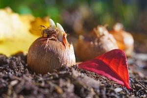 Travaux et semis au jardin en novembre, conseils