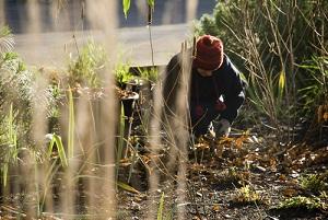 Semis et travaux de jardinage en janvier, conseils