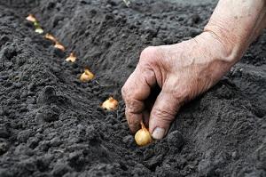 Quels semis de graines de légumes achetées en ligne faire au potager en mars