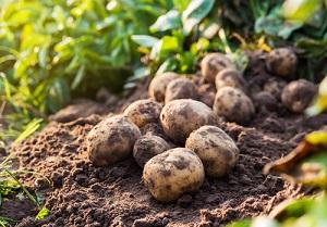 Quelles graines de légumes acheter en septembre pour semer et planter au potager?