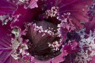 Semis de légumes et travaux de jardinage en décembre