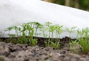 Quels semis de légumes et autres travaux de jardinage en janvier, achat de graines pour potager