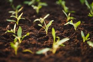 Quelles graines de légumes et de fleurs acheter et semer en mars?