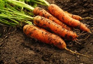 Semis et travaux de jardinage en octobre, achat de semences et accessoires