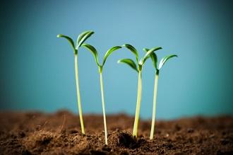 Comment éviter les semis qui filent et achat de graines pour semis