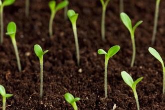 Semis de graines de légumes en mai