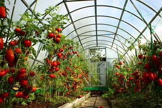 Semis de légumes sous serre : commander vos graines