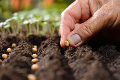 Personne qui sème en place des graines dans son potager