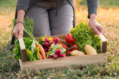 Récolte de légumes d'un jardinier débutant