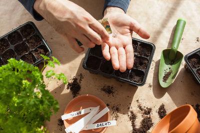 Semer des graines très fines pour le potager