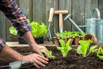 Jardinier débutant au potager
