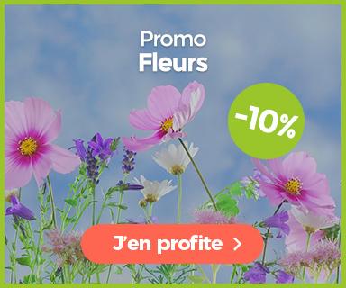 Promotion graines de fleurs